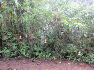 Hummingbird Feeder at Refugio Paz de las Aves